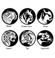 big cats vector image
