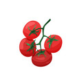 branch red tomatoes in bright color cartoon vector image vector image