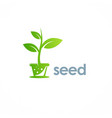 seed plant logo vector image vector image