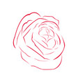 rose outline image vector image