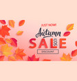 autumn sale banner with half price discount vector image