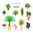 colorful set various potted houseplants