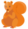 cute squirrel with brown fur vector image