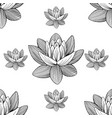 lotus lily water pattern vector image