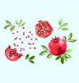 pomegranate set with leaves half pomegranate and vector image vector image