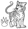 tiger with paw print Coloring Page vector image vector image
