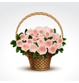 basket pink roses isolated vector image vector image