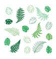 fern and monstera leaves vector image vector image