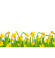 narcissus border vector image vector image