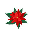 poinsettia with bright red petals and green leaves vector image vector image