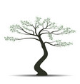 bonsai tree with leaves vector image vector image