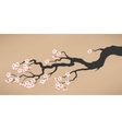 branch blooming cherry vector image
