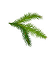 green branch of fir or pine tree natural element vector image vector image