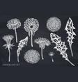 set hand drawn chalk dandelion vector image