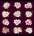 set of cherry and apple blossom vector image vector image