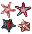 set realistic starfishes for design vector image vector image