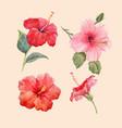 watercolor hibiscus set vector image vector image