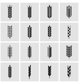 black wheat ear icon set vector image vector image