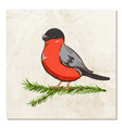bullfinch on a branch with old paper background vector image vector image