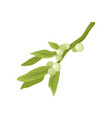 flat icon of mistletoe branch with small vector image vector image
