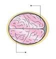 sections of human brain vector image vector image