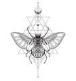 hand drawn esoteric symbol bug with sacred vector image vector image