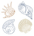 seashell collection isolated on the white backgrou vector image vector image
