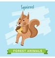 Squirrel forest animals vector image vector image