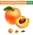 Apricot on white background vector image vector image