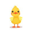 cute little yellow duck chick character cartoon vector image vector image