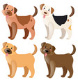 four dogs with different fur colors vector image vector image