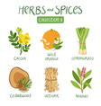 Herbs and spices collection 5 vector image vector image
