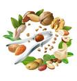 nutcracker and nuts vector image