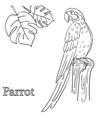parrot coloring pages for children eps 10 vector image
