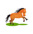 cute brown horse in running by green grass animal vector image vector image