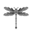 dragonfly with entangle body vector image vector image
