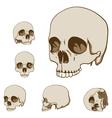 Human skulls set