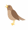 nightingale bird isolated on vector image vector image