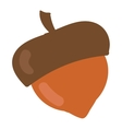Dried acorns flat vector image vector image