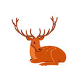 graceful brown deer with antlers lying wild vector image