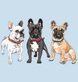 set french bulldog dogs vector image