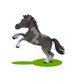 flat design of cute gray spotted horse vector image vector image