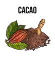Heap of cocoa powder with wooden scoop and cacao vector image vector image