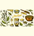 mustard seeds set spicy condiment seasoning vector image vector image