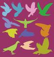 pigeon 2 vector image vector image