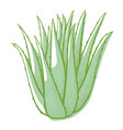 aloe bush icon green succulent plant or cactus vector image vector image