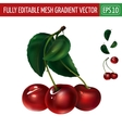 Cherry on white background vector image vector image