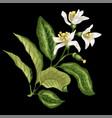 citrus flower branch of orange lemon lime fruit vector image vector image