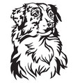 decorative portrait of dog australian shepherd vector image vector image