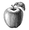 Engraved apple vector image